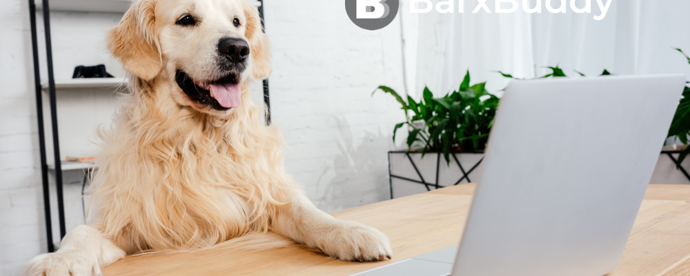 Attention Dog Lovers: Highlights From BarxBuddy's Online Resources